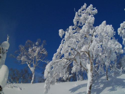 bluebird morny in Niseko