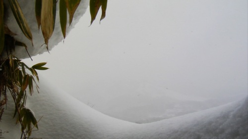 Some Green Bamboo Amid The Endless Snow