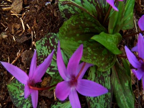 Hokkaido wildflowers